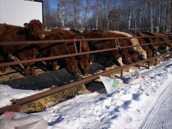 Level Welding Livestock Equipment Self Feeders Emta